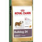 bulldog-24-adult_large