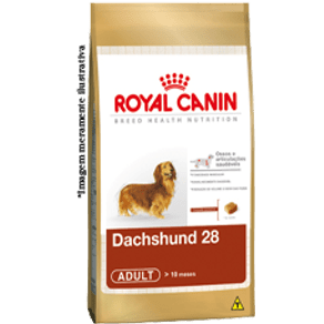 dachshund-28-adult_large
