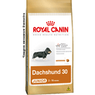 dachshund-30-junior_large