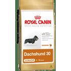 dachshund-30-junior_large