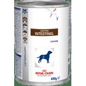 gastro-intestinal-wet_large