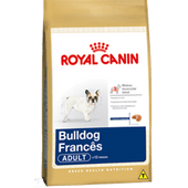 bulldog-frances-adult_large