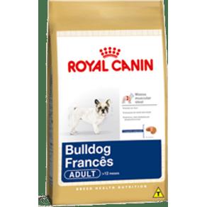 bulldog-frances-adult_large