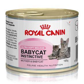 baby-cat-195