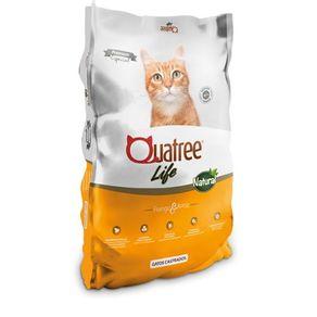 quatrre-gatos-castrado